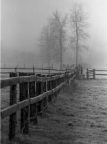 Vanishing in the Mist