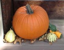 Harvest at the Door