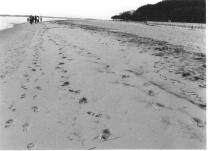 Walkin' in your footsteps