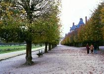 Fontainebleu Trees