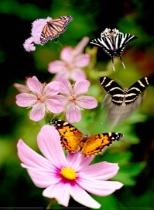 Four Butterflies