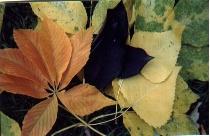 Leaf Grouping