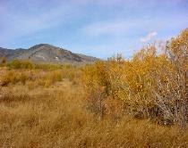 A Golden Valley