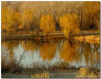 Fall Reflections No.1