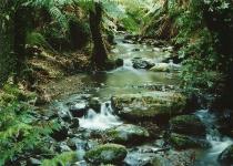 Scenes of Tarra Valley