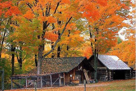 muskoka fall colour