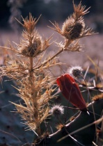 Native Texas Flora