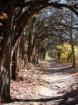 Haunted Path