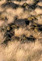 Lava Rock in Grass
