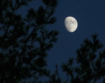 Gibbous Moon Rising