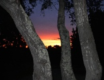 Oak Sundown