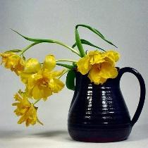 Tulips Bending