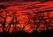 Red Sawhill Sunri...