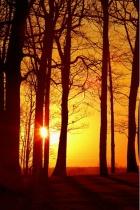 Sunset Through Winter Trees