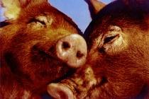 'Till Bacon Do We Part.....