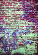 Surreal Wall