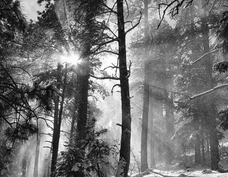 Snow Fall Rays