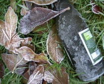 Frozen leaves with bottle