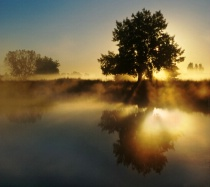 A Splash Of Sunshine
