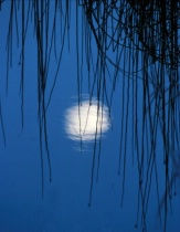 Moon In The Reeds