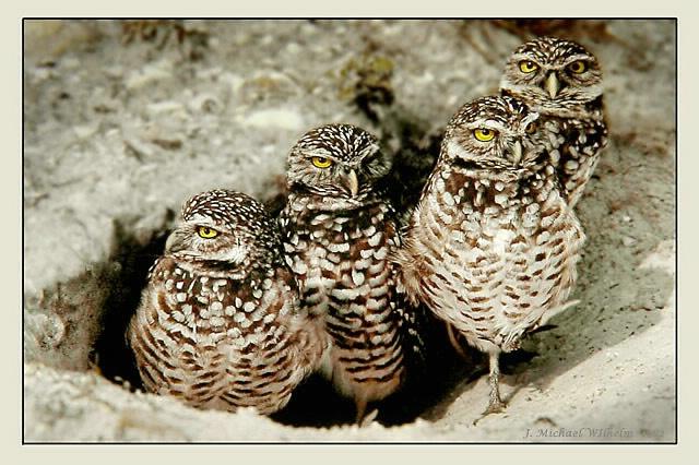 Owlsome Foursome