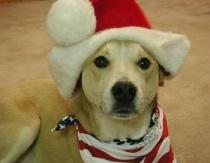 Patriotic Santa Paws