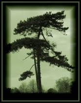 Green Sky & Tree