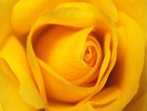 Deep Yellow Journey