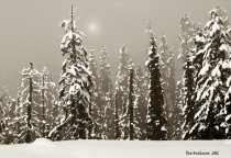 Foggy winter night