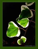 Backlit Leaves No.2