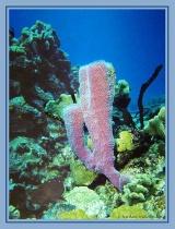 Cozumel, Palencar Reef