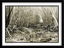 Mangrove Forest No. 1