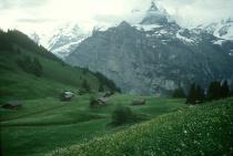 Swiss meadow, near Murren
