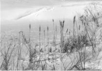 Snowscape with Cattails