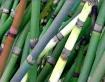 Reeds n Color