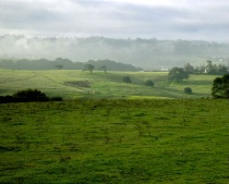 Country Mist