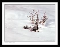 Winters Beauty No.1
