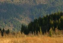 Swamp Hill