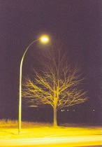 Lampost And Tree