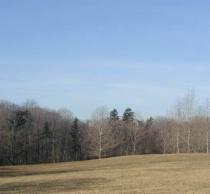 Meadow sunny winter morn