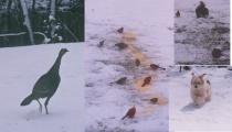 winter bird collage