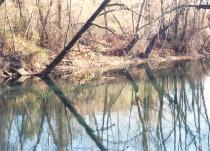 Stony Brook Reflections #4