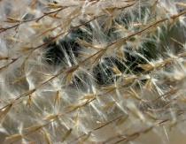 Silky Spikes