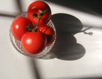 Still Life Bowl of Tomatoes from the Vine