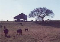 Barn & Tree at Sunrise