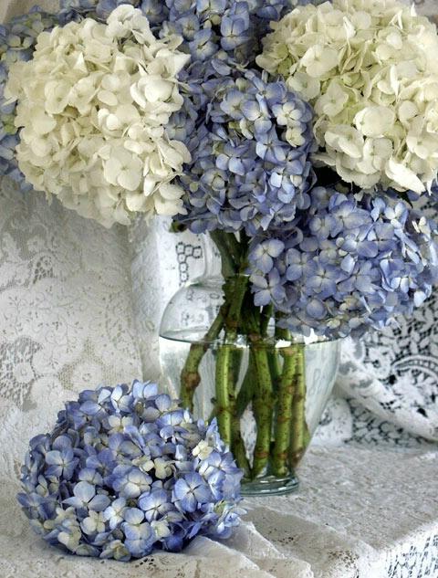 Flowers & Lace