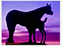 Mare & Foal Experiment