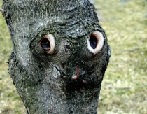 The Face in the Tree 1