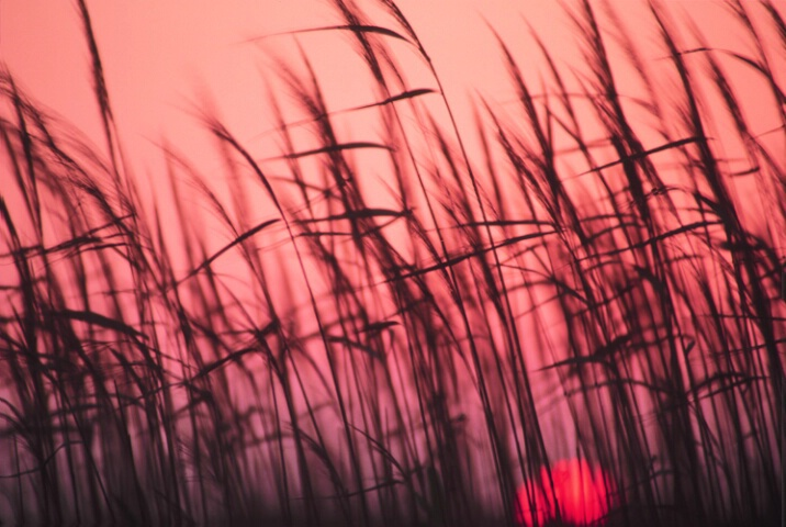 Sea grasses at sunset