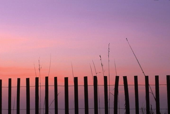 dawn fence
